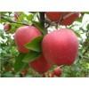 红富士苹果果园订购价格山东红富士苹果价格