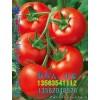 专业代收西红柿 黄瓜 青瓜 番茄 秋季花蕾甜瓜