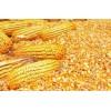 战友公司求购大量玉米,高粱,大豆,酒糟粉