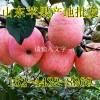 红富士苹果价格 山东红富士苹果产地批发价格