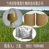 大豆甙元黄豆苷元98%